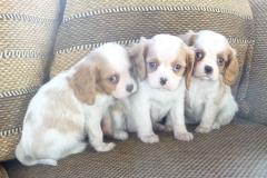 small pups 016