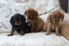 small pups 019