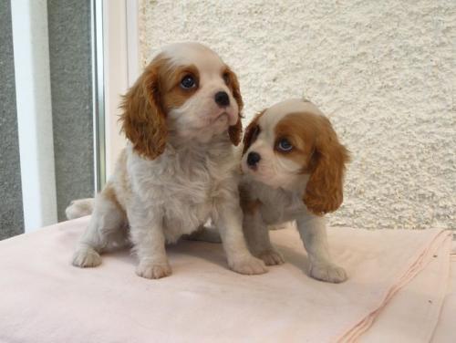 pups-062